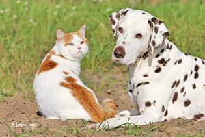 Ernährungsberatung Hund Katze
